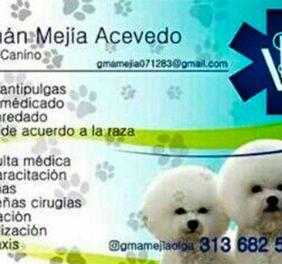 GMA Servicios Veterinarios